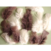Brown Feathers and Cream Feathers Pack