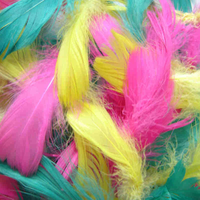 Small Feathers for Children's Crafts