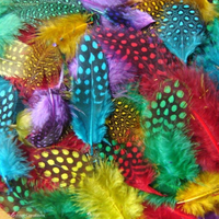 Exotic Spotted Feathers
