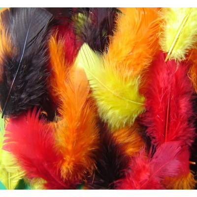 Bold Coloured Feathers